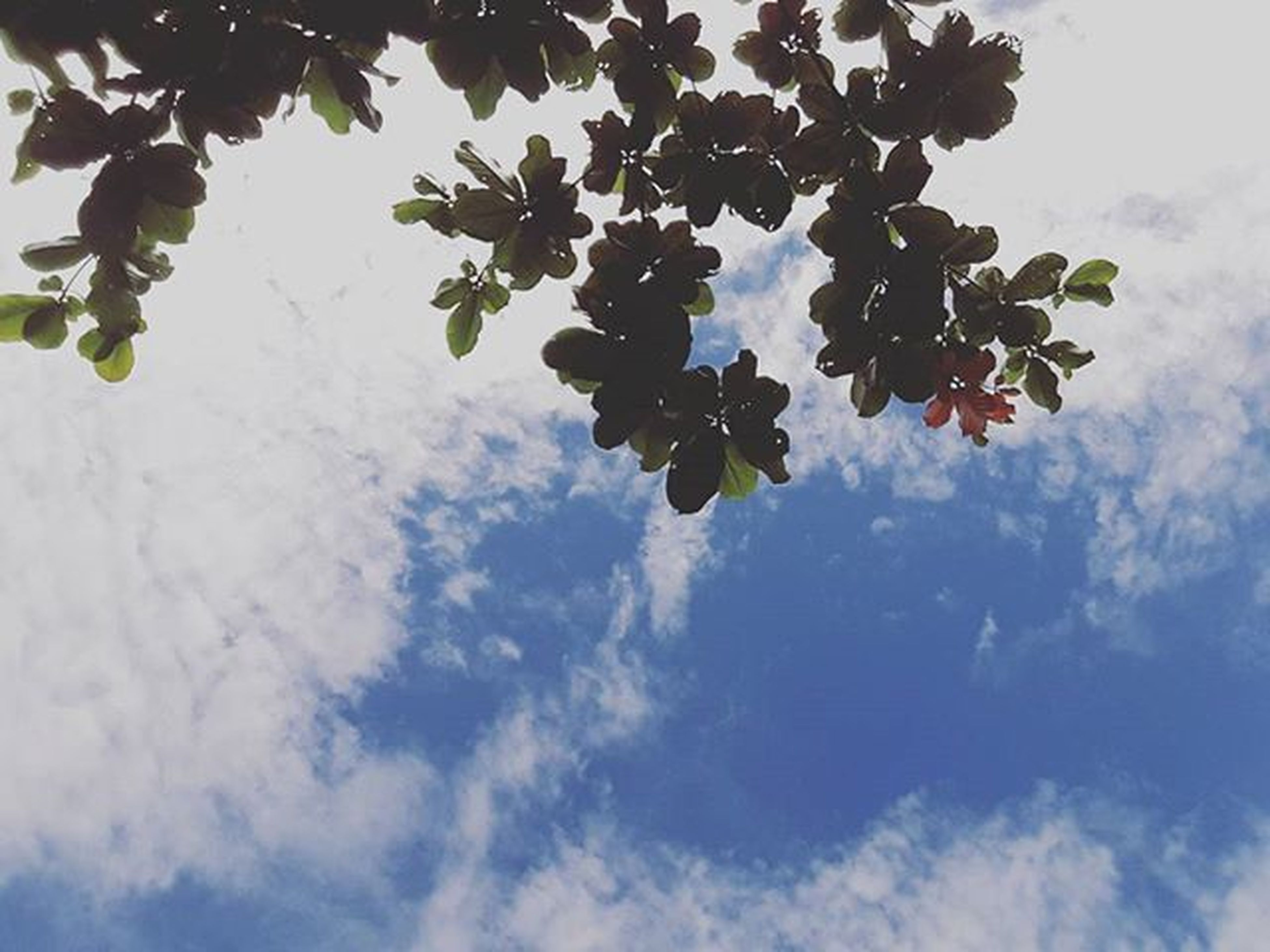 low angle view, tree, branch, growth, sky, leaf, nature, beauty in nature, fruit, freshness, tranquility, day, cloud - sky, outdoors, no people, green color, cloud, food and drink, twig, sunlight