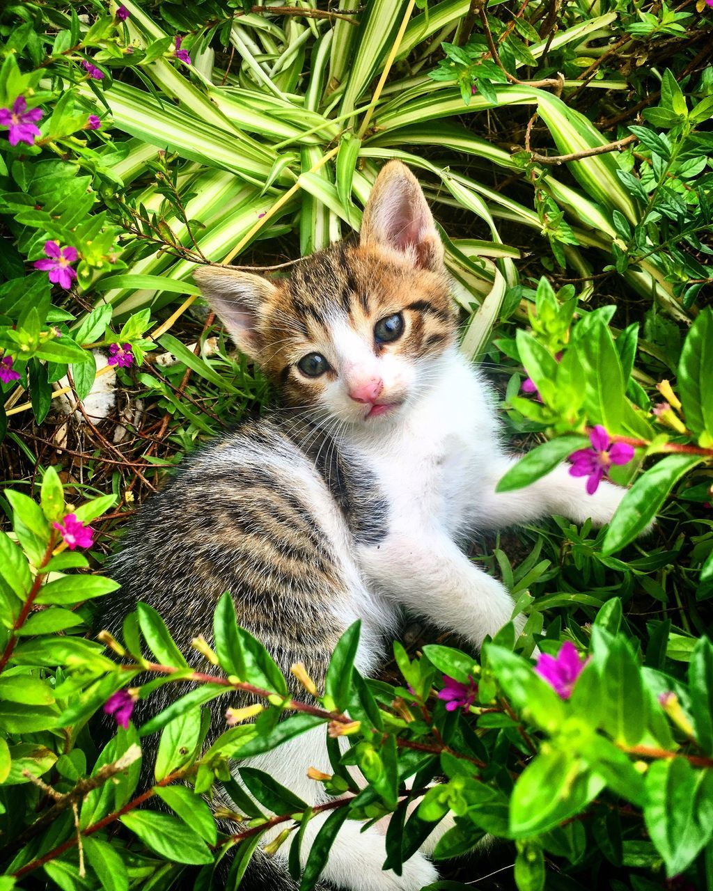 domestic cat, animal themes, pets, cat, feline, one animal, domestic animals, day, mammal, green color, no people, outdoors, plant, growth, flower, leaf, looking at camera, nature, grass, portrait