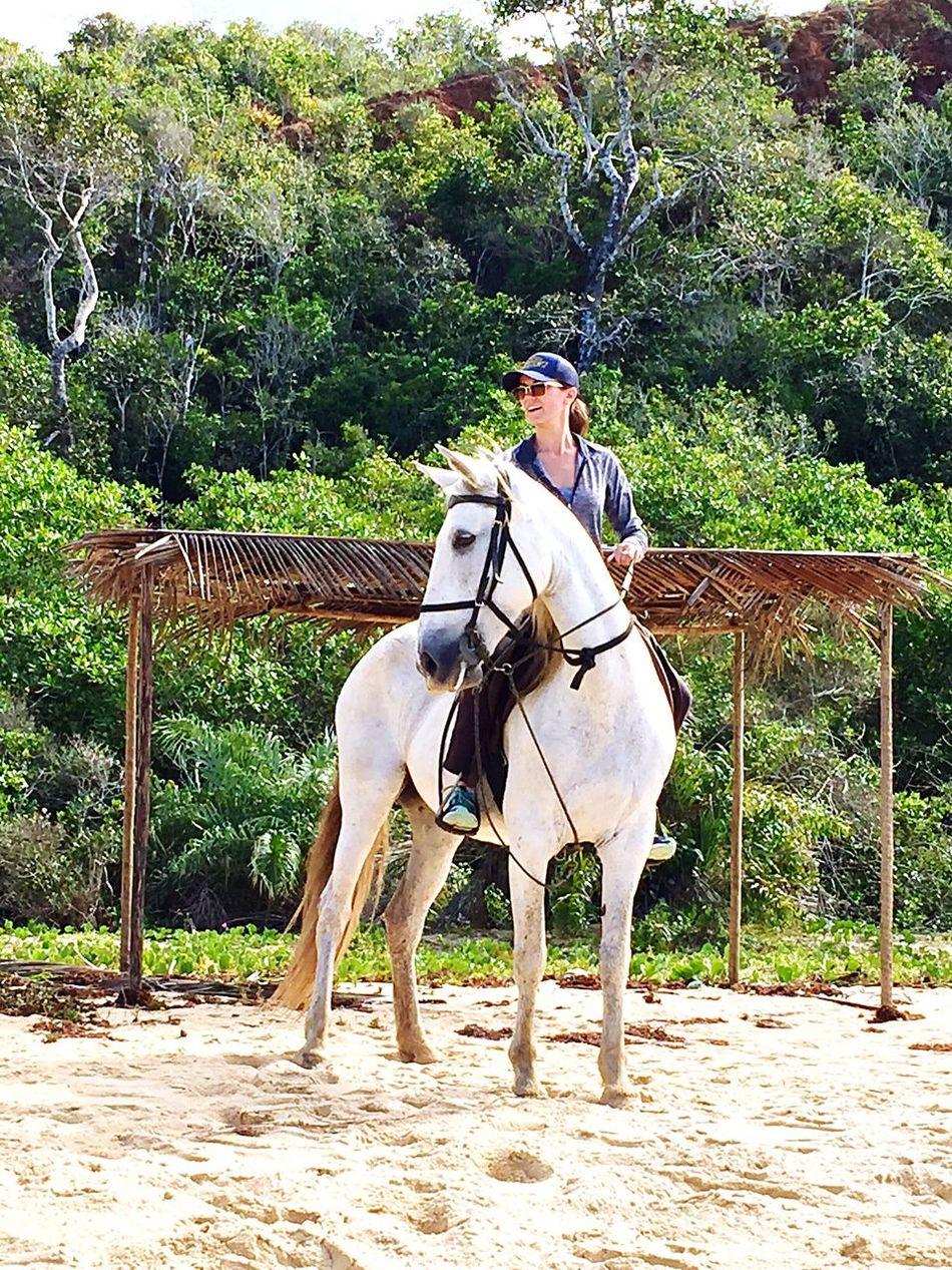 🇧🇷🦄❤️ Equestrian Timebrasil First Eyeem Photo