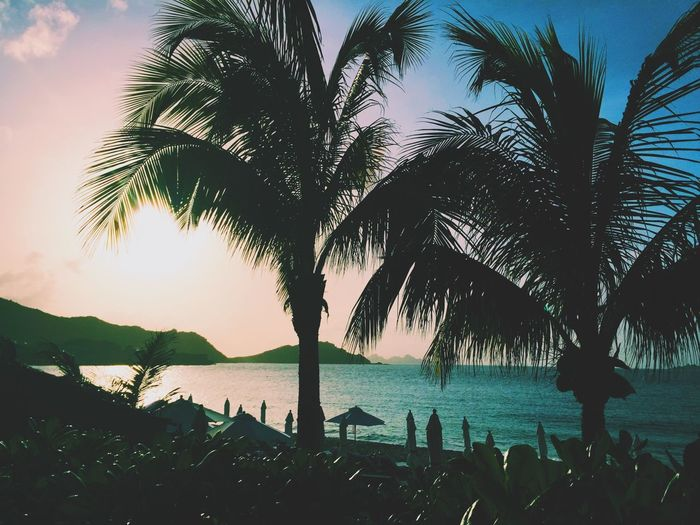 Cheval Blanc Beach Palm Trees Sunset St Barths Clouds Sky Clouds And Sky The Great Outdoors - 2015 EyeEm Awards The Adventurer - 2015 EyeEm Awards