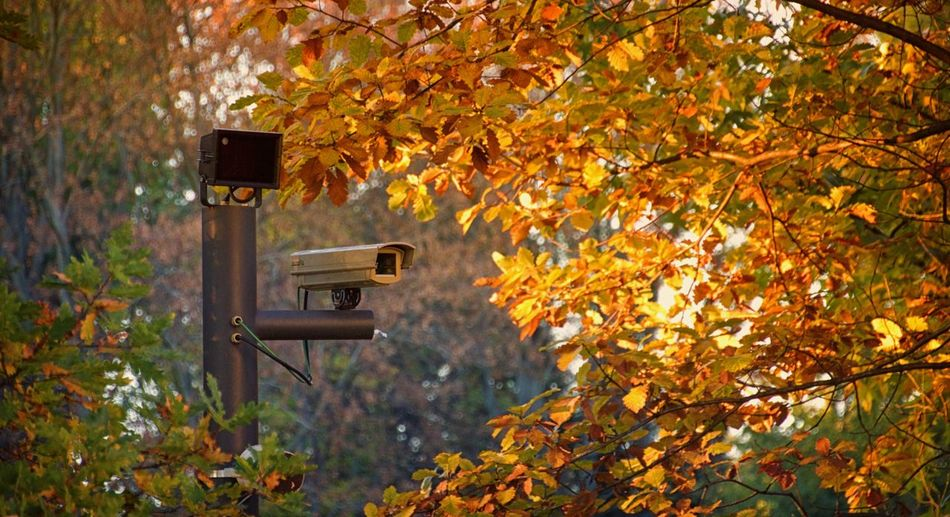 security camera in a public park in Berlin Jungfernheide, Germany. Autumn Branch Camera Cameras Cctv Cctv Camera Daylight Evening Evening Light Leaves Monitoring Observation Orange Outdoor Outdoors Safety Security Security Cam Security Camera Security System Securitycam Supervision Surveillance Surveillance Camera Trees