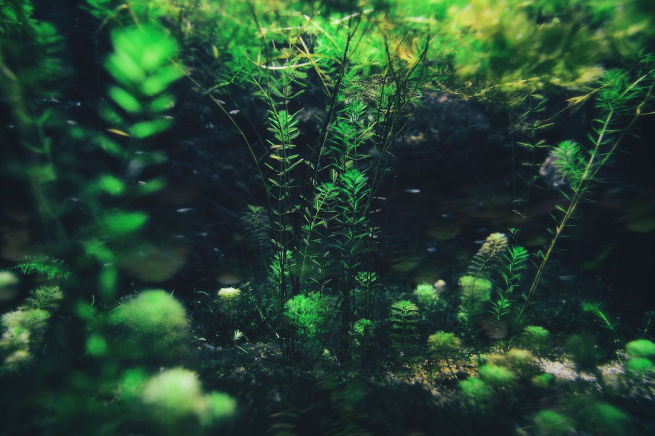 Nature Plant Green Color Growth Forest Tranquility Day Beauty In Nature No People Water Underwater Outdoors