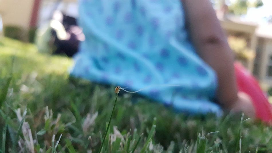 Selective Focus Summertime Grass Tiny Bug On A Blade Of Grass Inconspicuous Nature In The Suburbs Relaxing