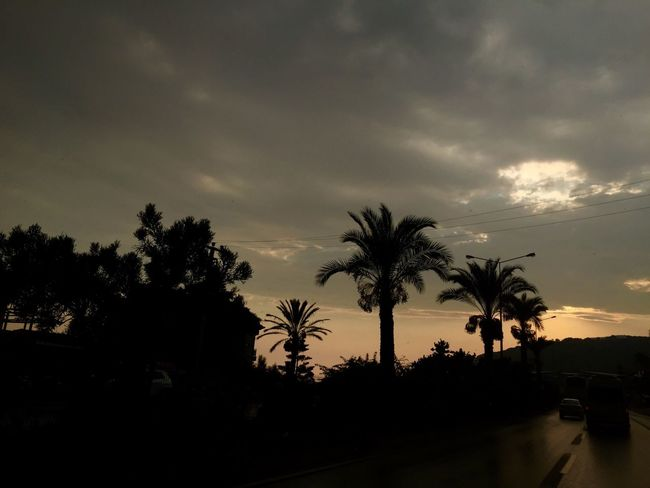 Palm Tree Sunset Tree Tranquility Nature Tourism Solitude IPhoneography Creativity Scenics Water Sky Dark Growth Silhouette Tranquil Scene Beauty In Nature Cloud Calm Cloud - Sky Outdoors Outline