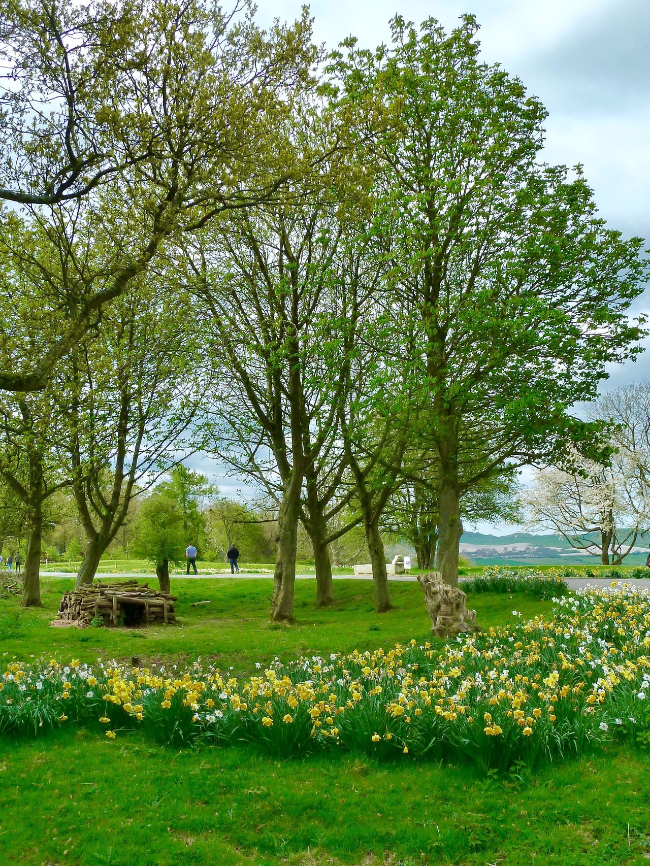 Whipsnade Zoo Springtime Tree Grass Flower Nature Tombstone Green Color Tranquility Beauty In Nature Growth Day Tranquil Scene No People Outdoors Landscape Field Scenics Sky Branch