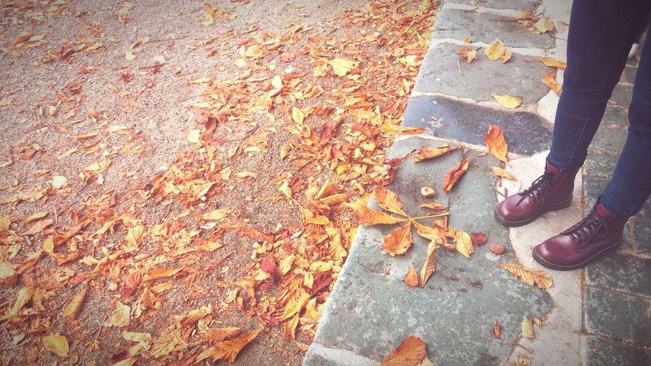 Fall Beauty Autumn🍁🍁🍁 Autumn Colors Leaves_collection Orange Colour Bestoftheday Fall Days EyeEm Best Shots EyeEm Nature Lover The Week On EyeEm