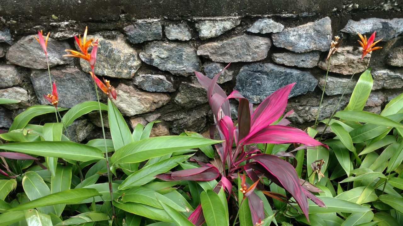 Vibrant plantlife. EyeEmNewHere EyeEm Indonesia Adapted To The City Tropical Beauty In Nature Minimalism Pink Color Focus On Foreground Flower Head Simplicity Growth Petal Fragility Papua Indonesia  Scenics Eyeemnoedits No People Red Minimal Building Exterior Built Structure Tropical Climate Outdoors