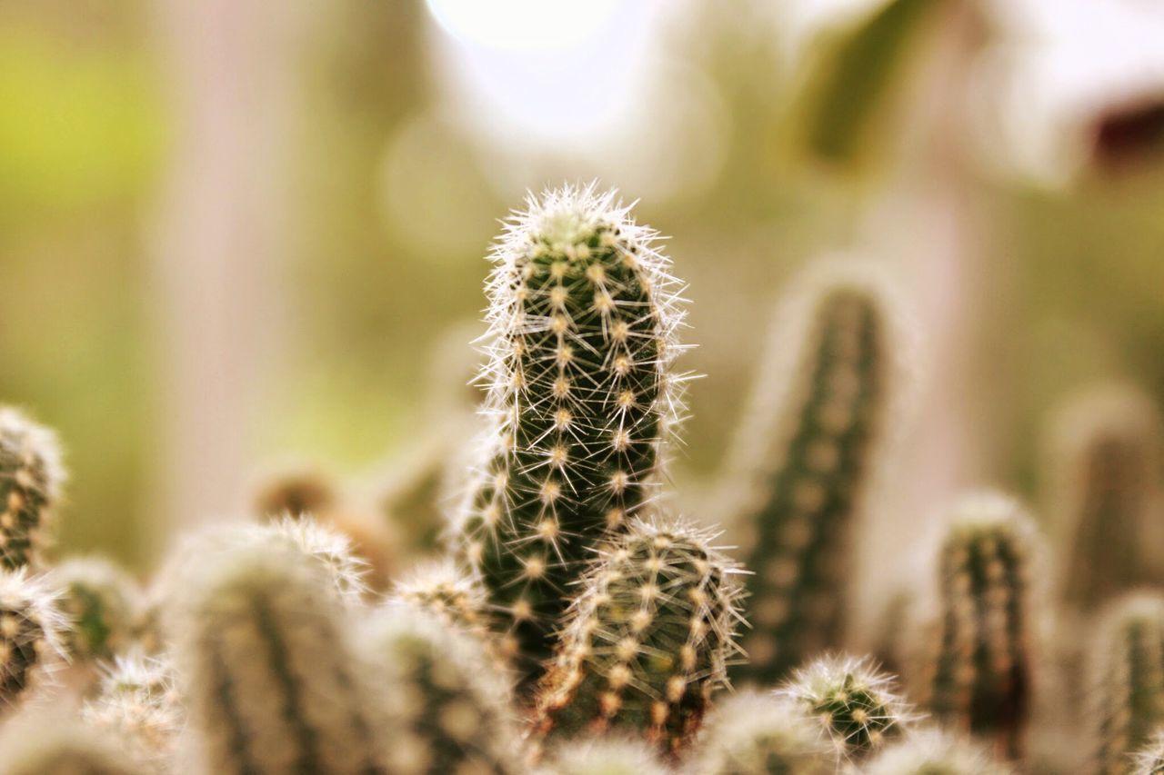 Beautiful stock photos of plant, Cactus, Close-Up, Day, Growth