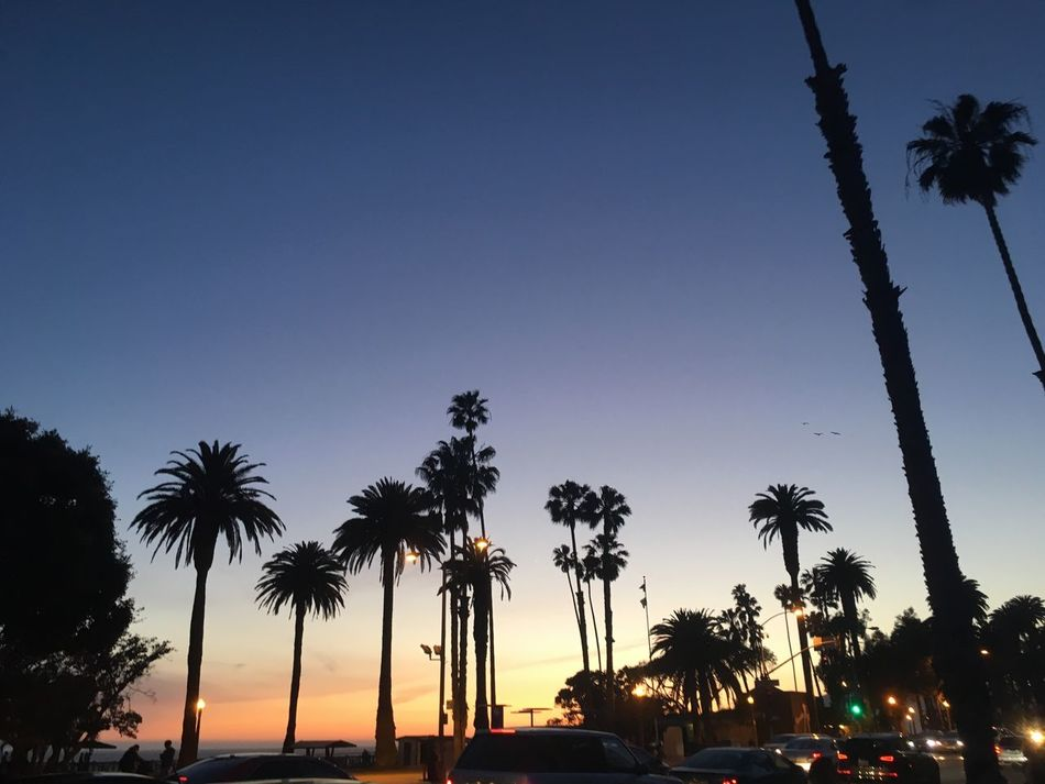 Palm Tree Tree Silhouette Tree Trunk Growth Nature Sunset Beauty In Nature Sky Outdoors No People Palm Frond Low Angle View Scenics Blue Tee Day California Santa Monica