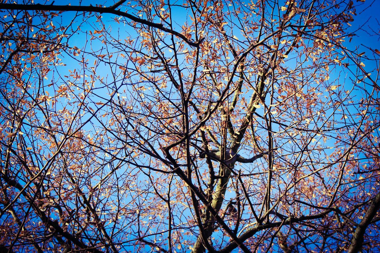 branch, tree, low angle view, bare tree, nature, beauty in nature, blue, flower, growth, sky, springtime, blossom, no people, day, twig, clear sky, outdoors, fragility, backgrounds, freshness, scenics, close-up