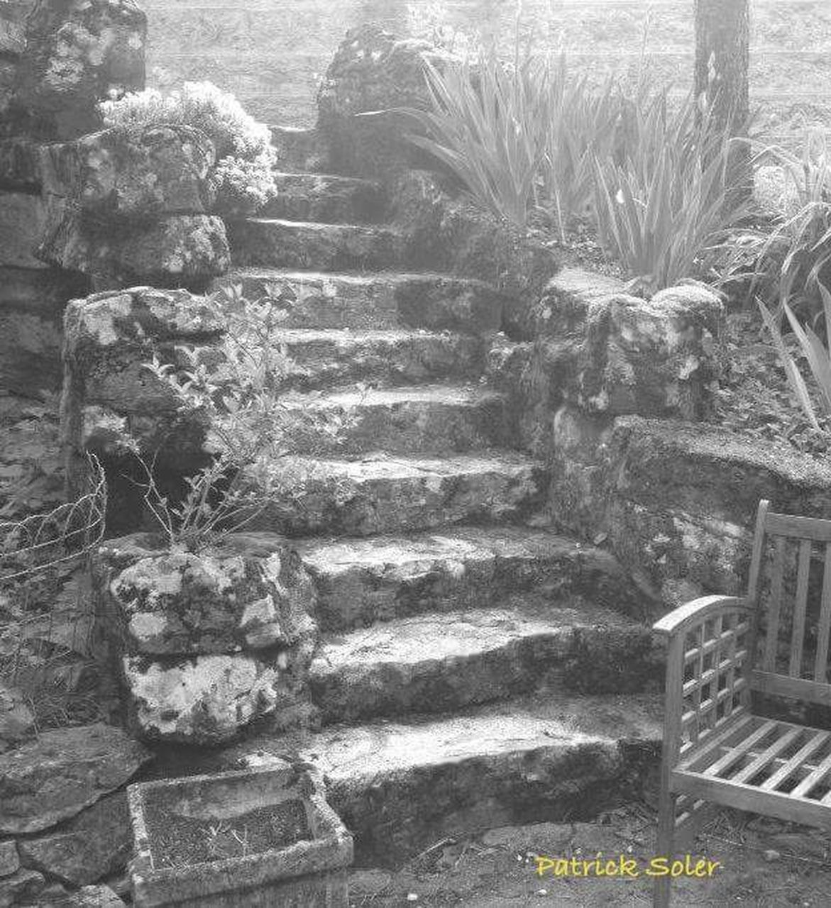 steps, steps and staircases, staircase, day, no people, outdoors, plant, nature, architecture