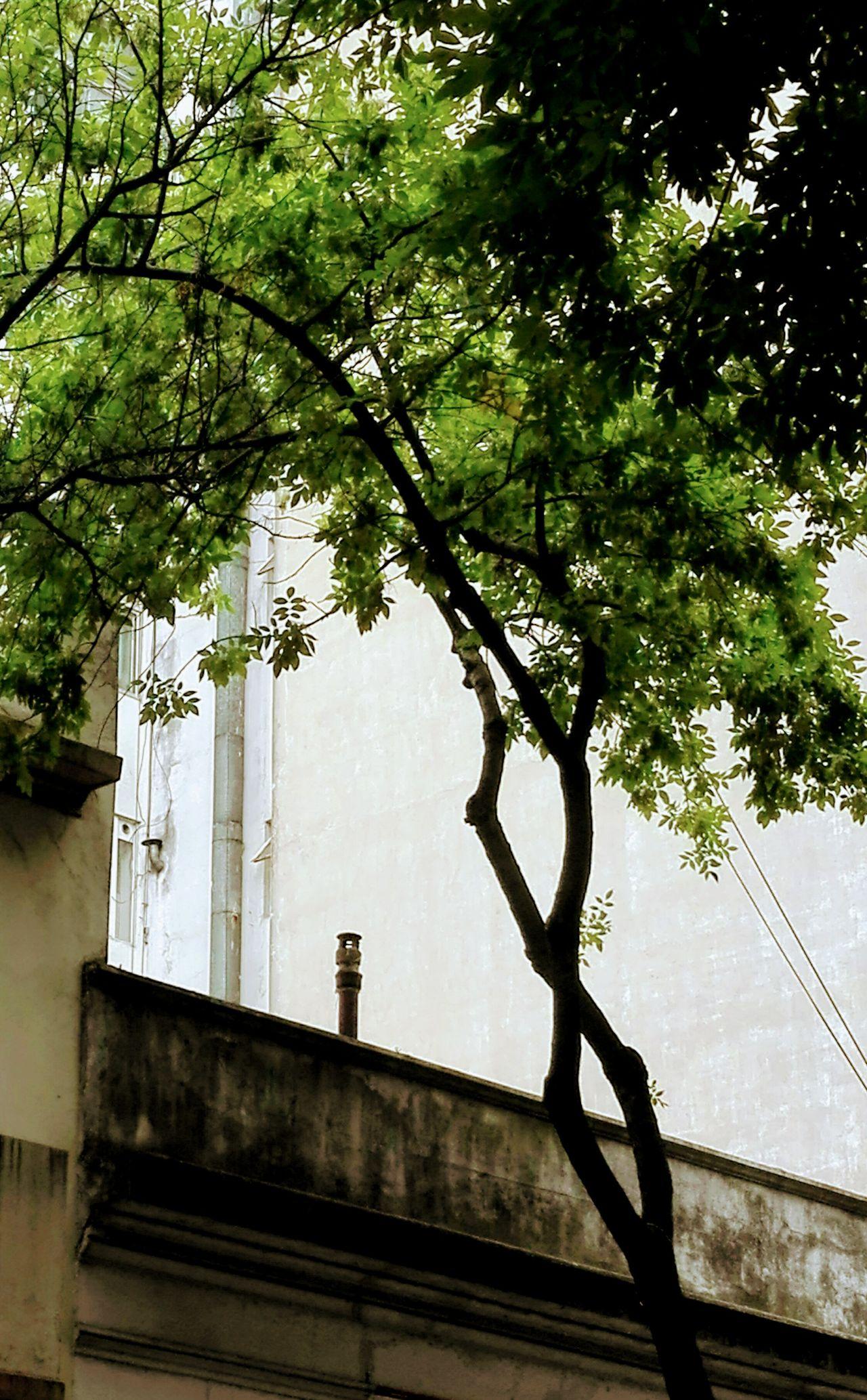 Urban Exploration Cityexplorer City Tree No People Built Structure Nature Outdoors Architecture Day Sky