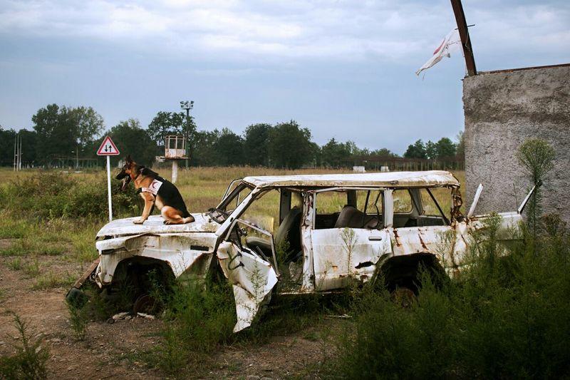 Langeroud Guilan Iran Dog