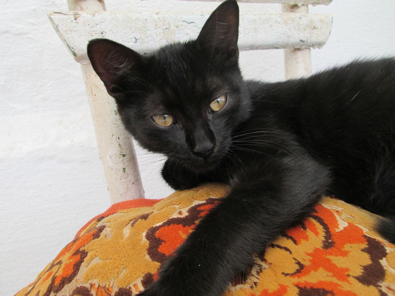 Cat♡ Catsagram Eyeem Art Zodiac Photography Cats Of EyeEm Catlady Hello World Light And Shadow Black And White Photography Photography
