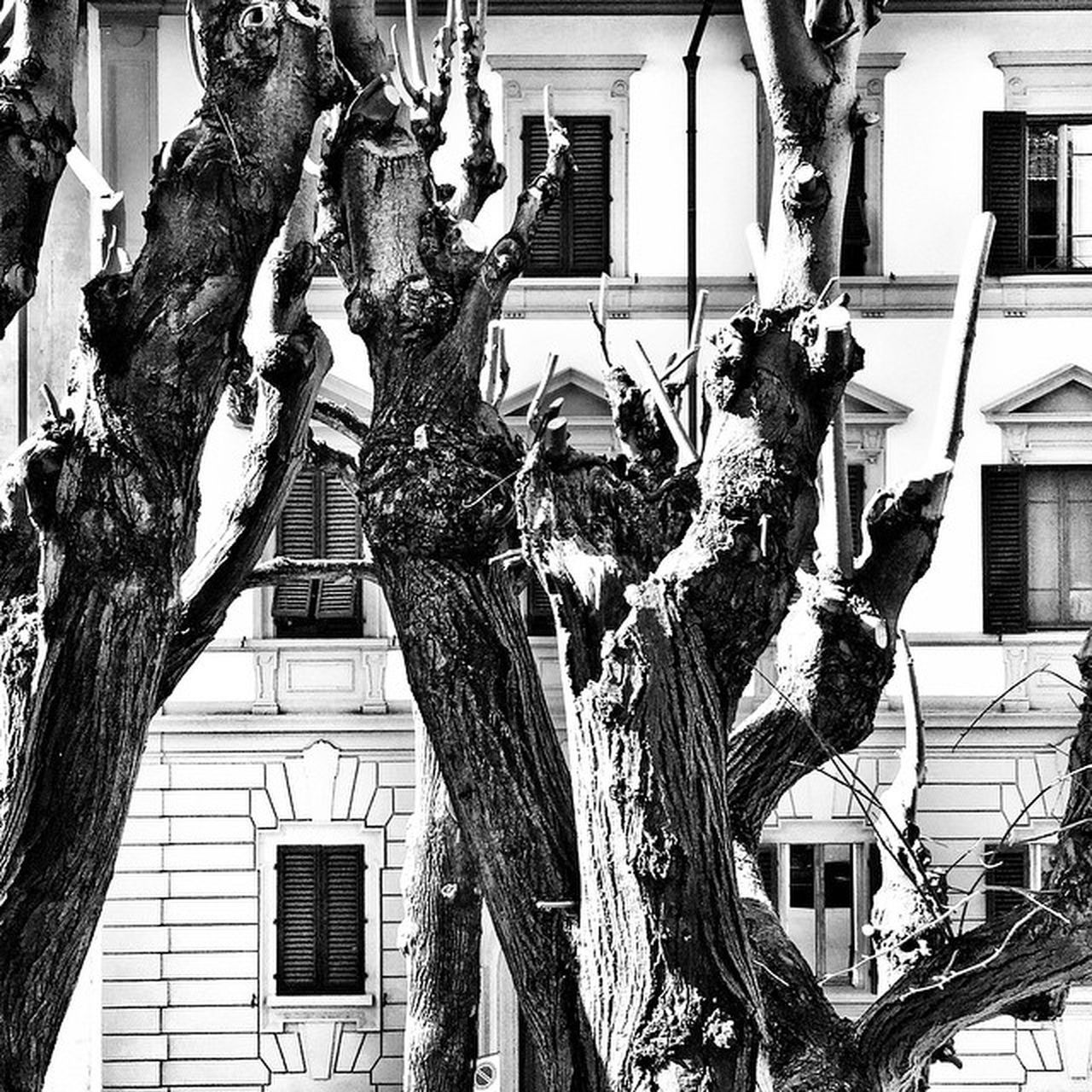 building exterior, architecture, built structure, tree, tree trunk, no people, low angle view, statue, outdoors, sculpture, day, branch
