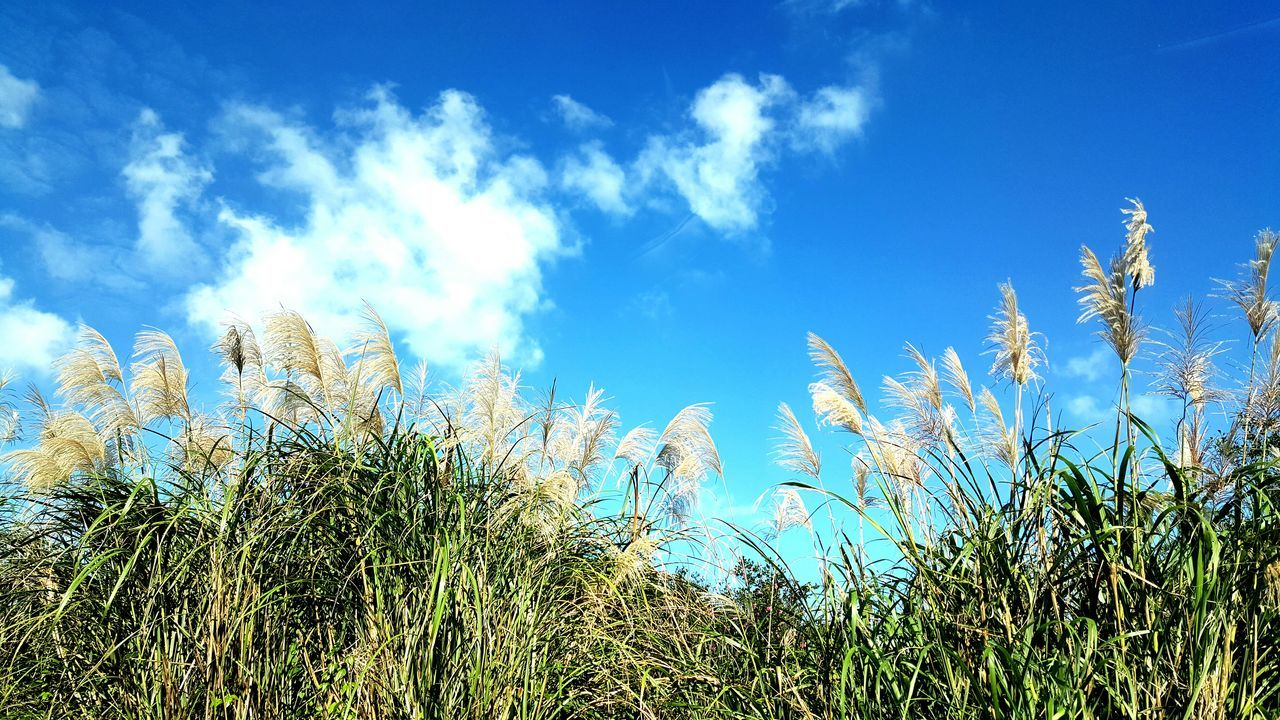 Taiwan Taipei Yang Ming Shan  Sky And Clouds Blue Sky Nature Low Angle View Beauty In Nature Growth Summer No People Outdoors Plant Day Tree Close-up