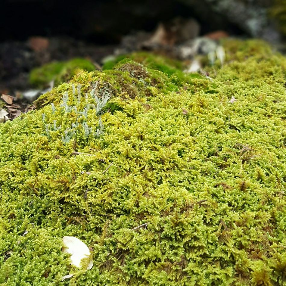 Colour of the month. Green Color Nature Day Close-up Growth No People Beauty In Nature Freshness Moss EyeEm Best Shots - Nature