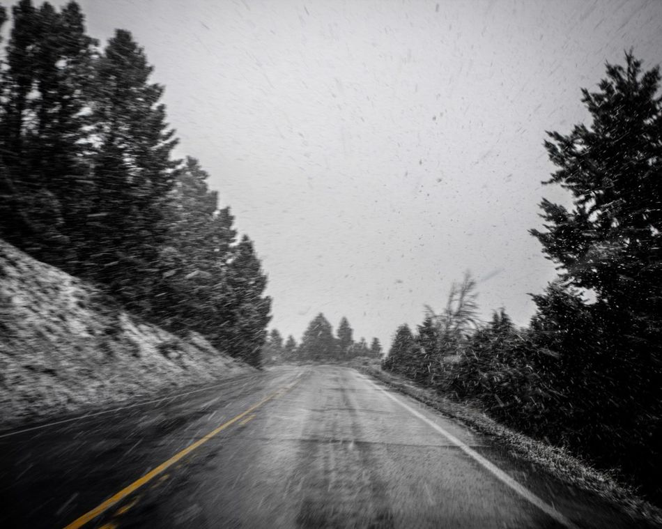 Yellowstone White-out The Way Forward Tree Road Transportation Day No People Nature Outdoors Clear Sky Sky Snow Snow ❄ White Out Conditions Blizzard Yellowstone National Park Yellowstone National Park Road Travel Destinations Travel Traveling Travel Photography Travelling Mountain Road Mountain Roads