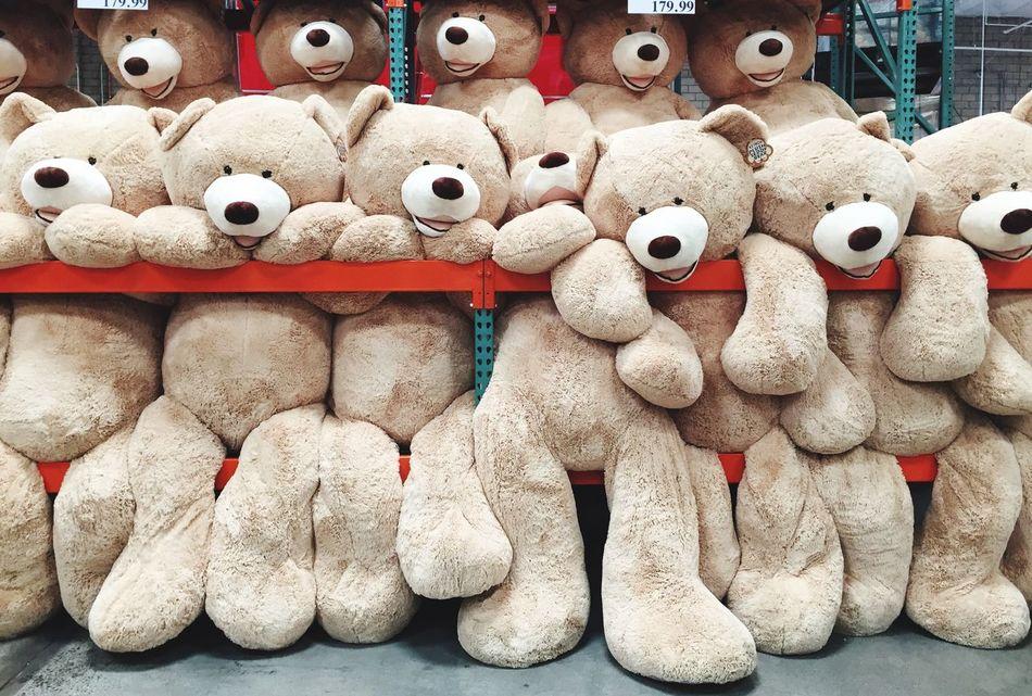 Costco Costcobear Stuffed Animals BIG Bear Toys Kids Cute