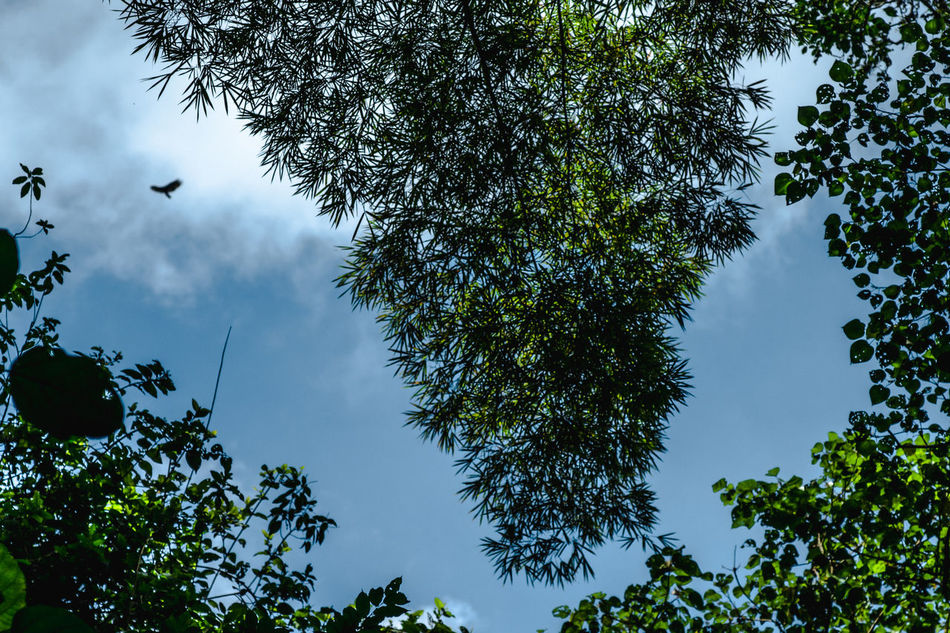 Animal Themes Animal Wildlife Beauty In Nature Bird Branch Cloud - Sky Day Jungle Low Angle View Mexico Nature Nature Nature Photography Nature_collection No People Outdoors San Luis Potosí Sky Tree Xilitla
