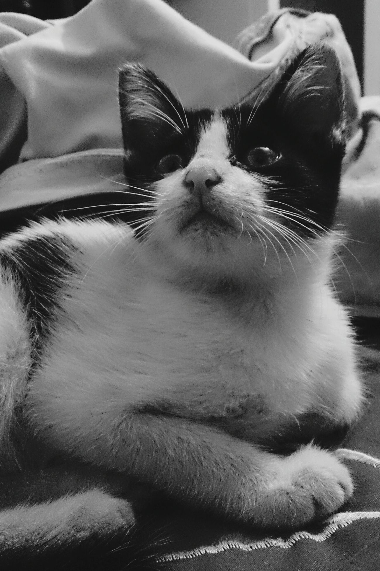 Wayne The Cat Lookingup Scared Cat Black And White Cuty Kitten Enjoying Life Taking Pictures Sylvester Adorable Resting Light Animal Chilling Relaxing Purr