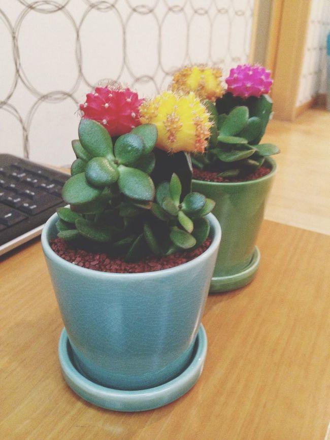 우리집 첫 식물