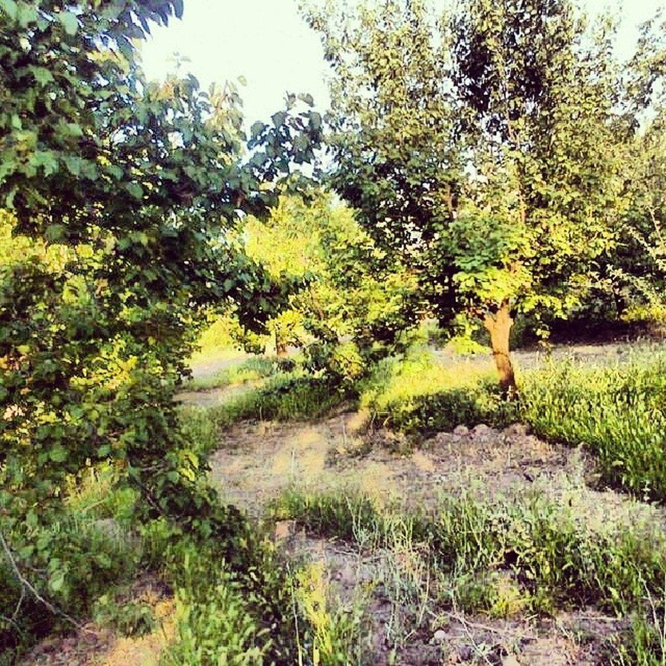 Malatya Kayısıkent Turkey Kayısı apricotinstagram instamood instashow greenlike nature nicepic photography photoshop ups blaa blaaaa