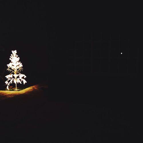 🎄🎁🎉🎊 Enjoying Life Christmas Lights Christmas Tree Happiness Nightphotography