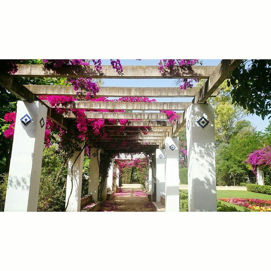 Plaza De España Garden, Best Beautiful Place Flower Wonderful Sunset #sun #clouds #skylovers #sky #nature #beautifulinnature #naturalbeauty #photography #landscape Taking Pictures Relaxing Nice Weather Enjoy