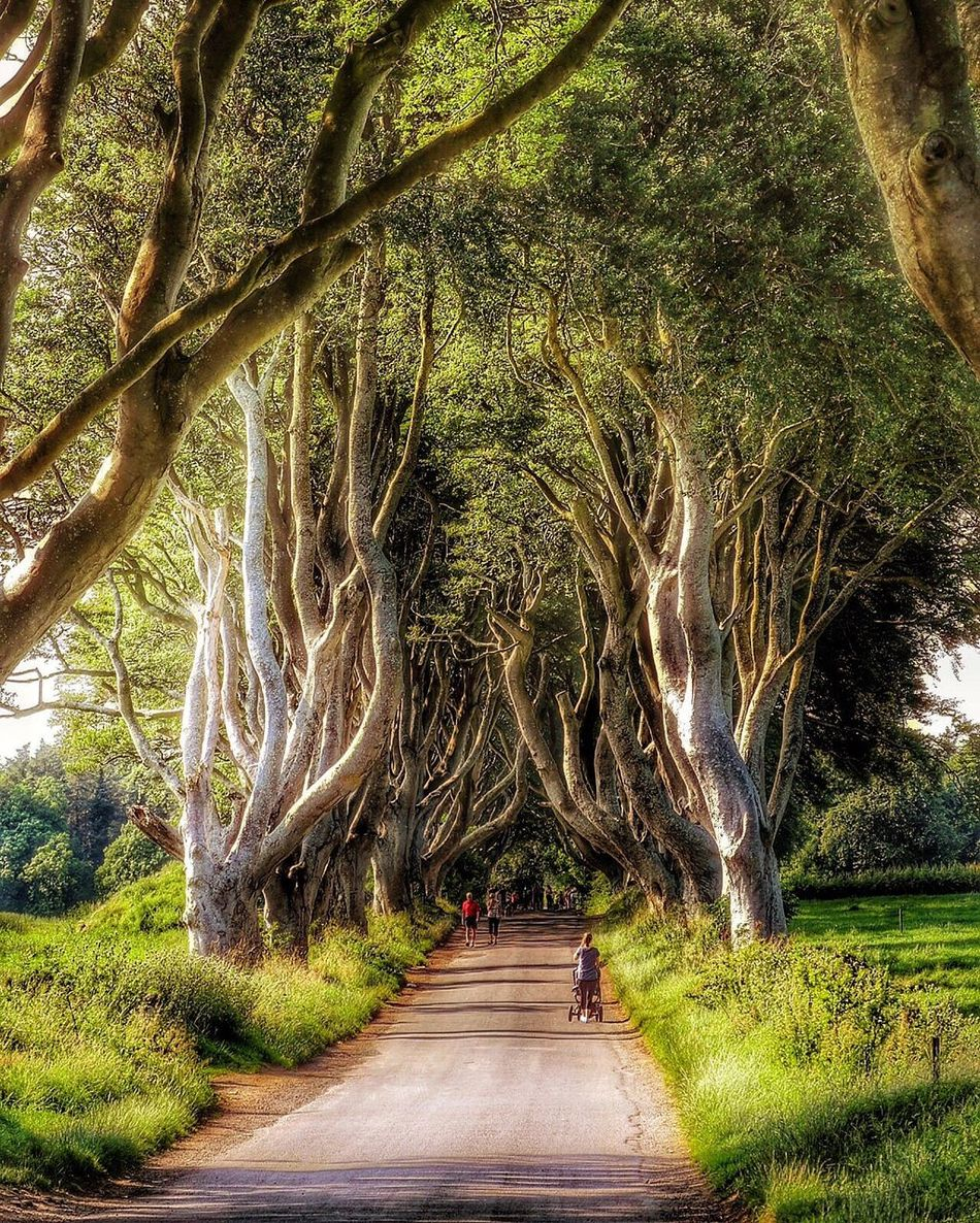Showcase July The Dark Hedges Game Of Thrones Discoverireland Northernireland Worldwide_shot EyeEm Best Shots Eye4photography  EyeEmBestPics Eyeemphotography Relaxing Check This Out