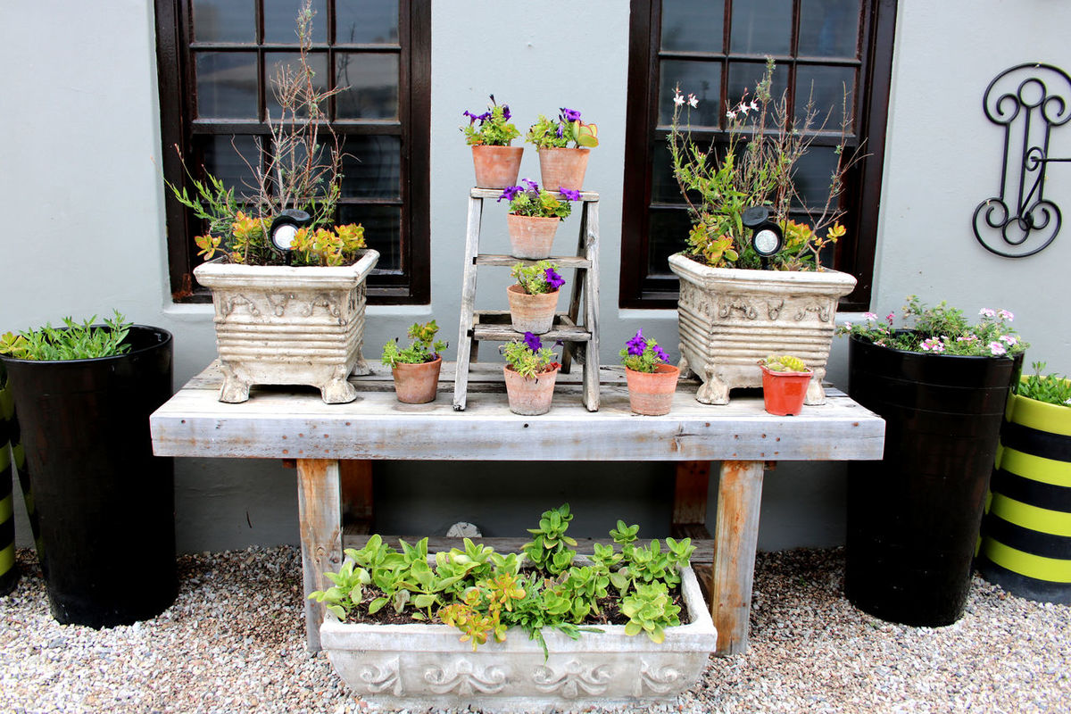 Nice Flower arrangement at the Garden Route in South Africa Absence Ambiente Arrangement Day Empty Flower Flower Pot Furniture Garden Garden Route Green Green Color Growth Nature Nice Living No People Plant Potted Plant Seat Shabby Shabby Look Side By Side South Africa Wood