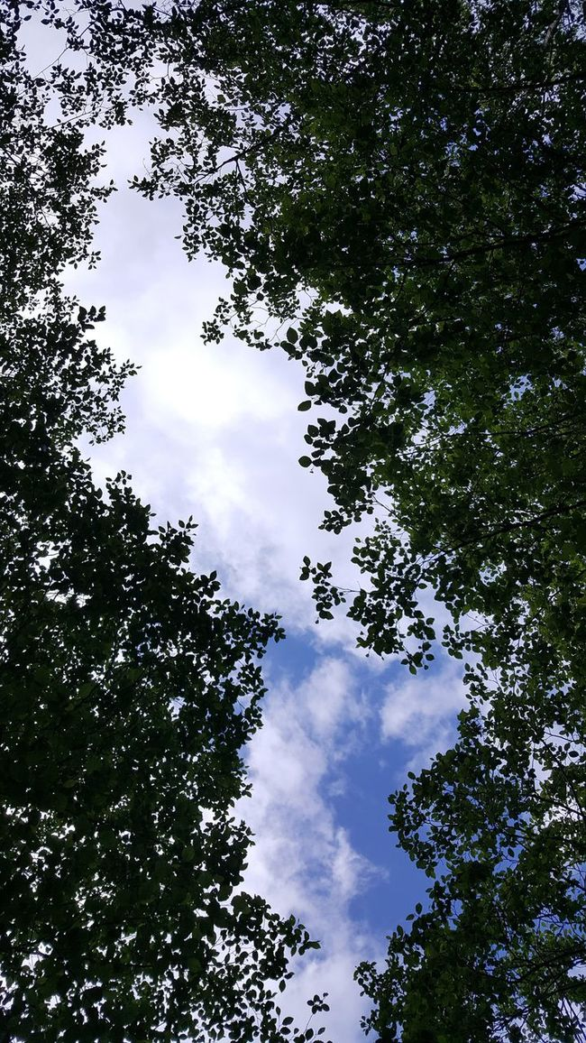 Backgrounds Beauty In Nature Blue Branch Cloud Cloud - Sky Cloudy Day Green Color Growth High Section Idyllic Low Angle View Nature No People Outdoors Scenics Sky Tranquil Scene Tranquility Tree Treetop