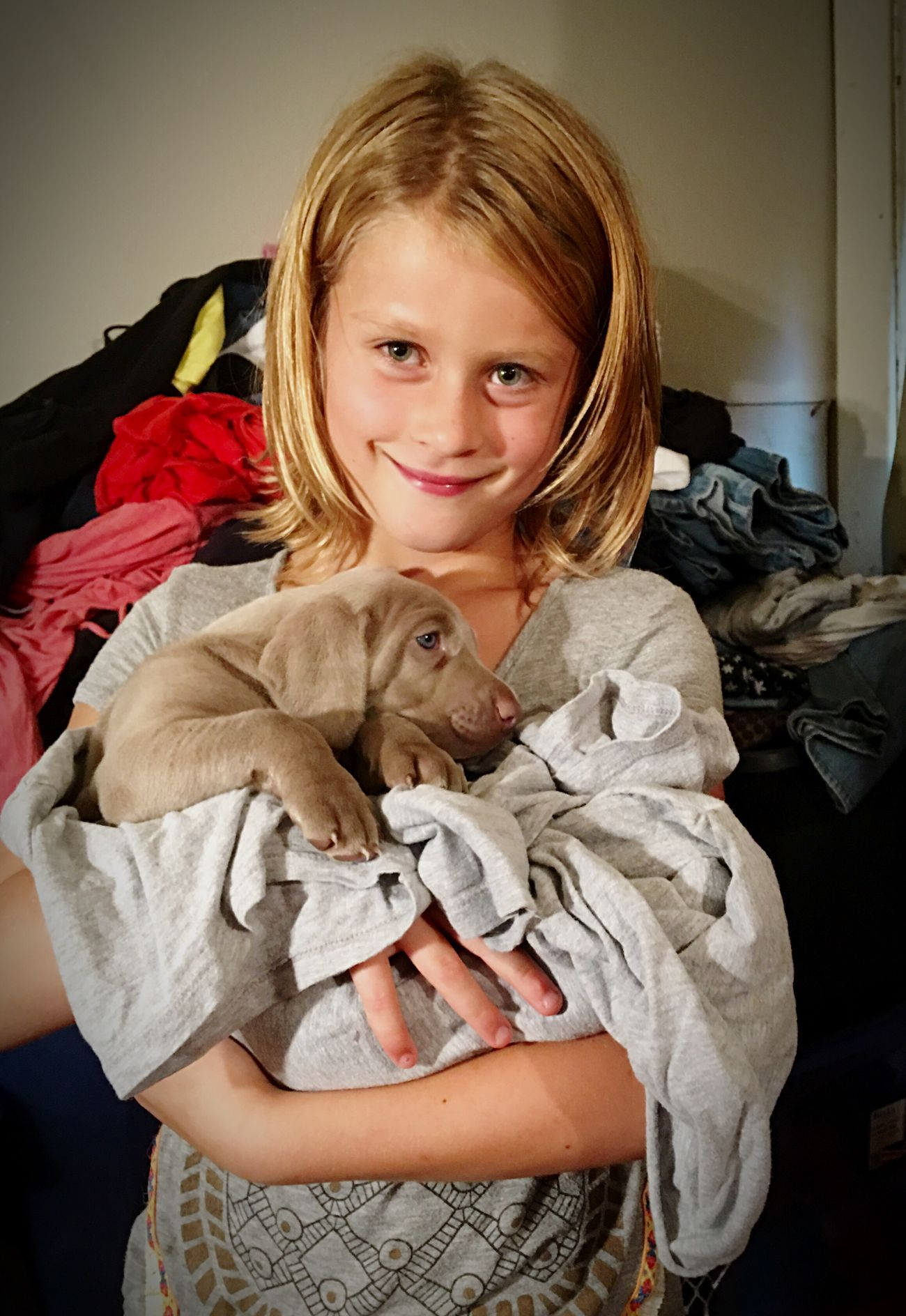 Puppy Childhood Weinheimer Weinheim Weinhemer Puppy Dogs Cute Grey Blue Eyes Daughter Girls Ilovemydogs Lovedogs