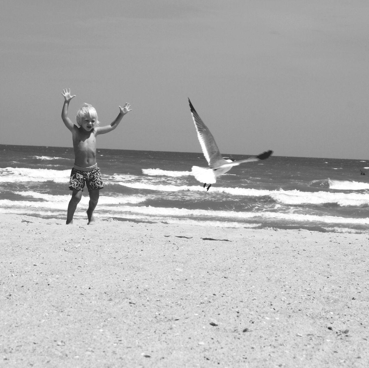 Beautiful stock photos of boy, Beach, Boy, Chasing, Child