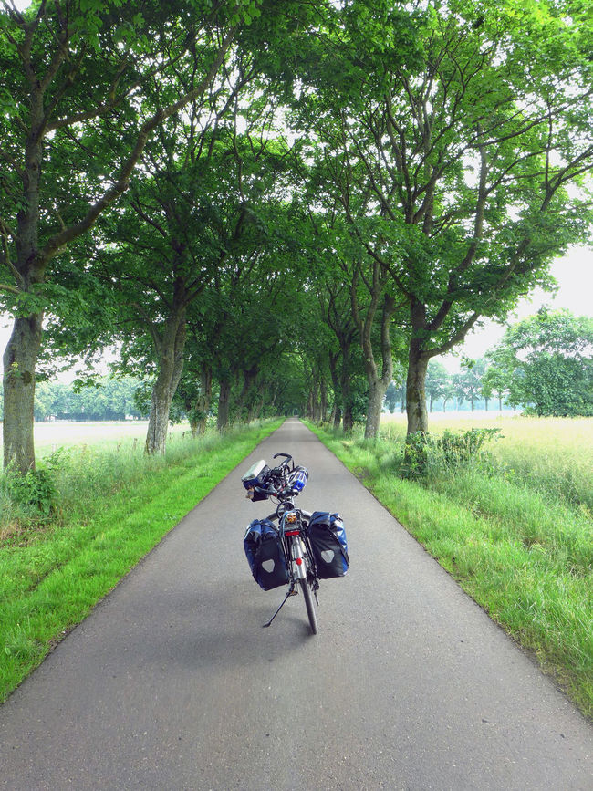 Alley Asphalt Bicycle Land Vehicle Mode Of Transport Nature Road The Way Forward Transportation Tree