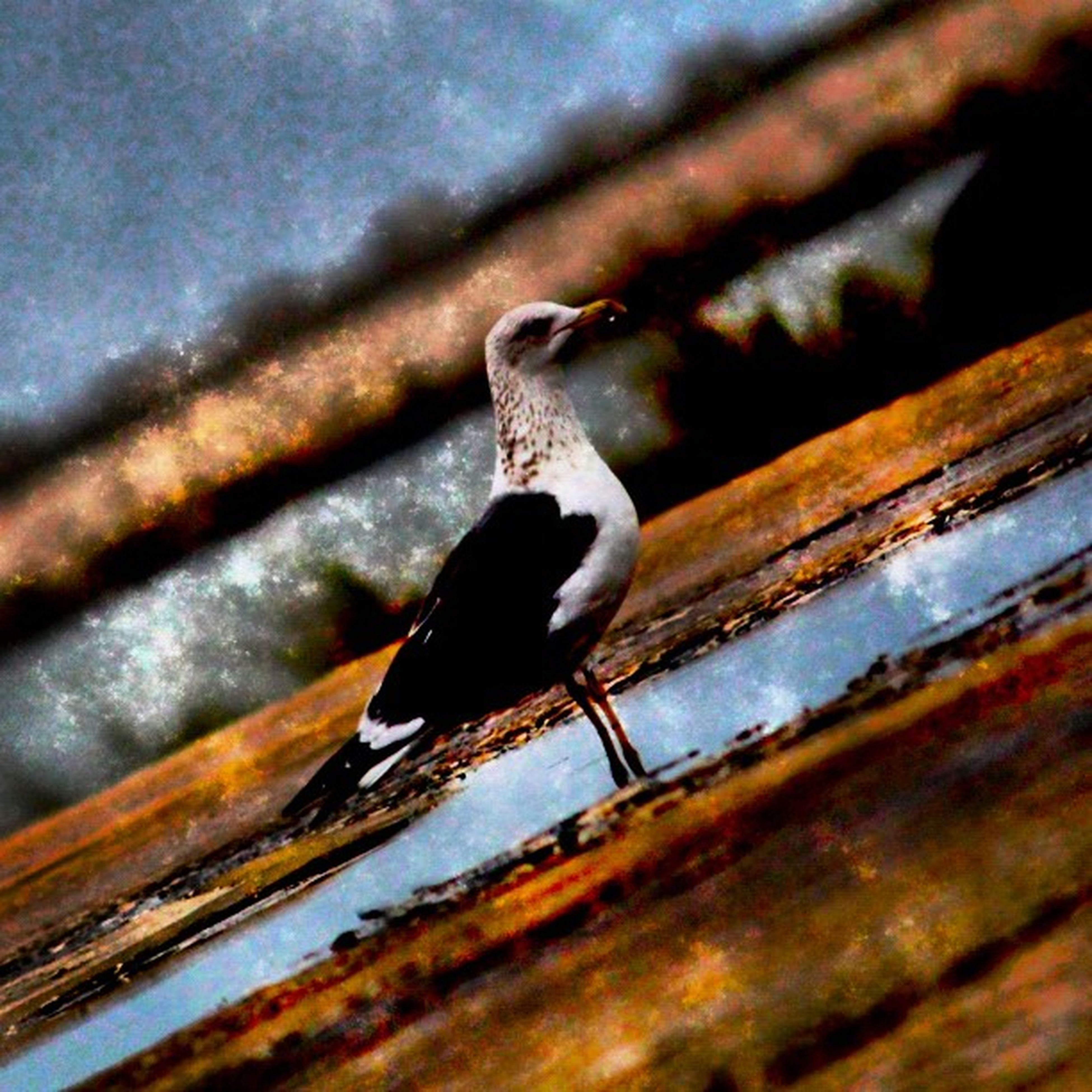animal themes, one animal, animals in the wild, wood - material, close-up, wildlife, metal, selective focus, focus on foreground, wooden, bird, wood, plank, rusty, day, perching, outdoors, snail, no people, metallic
