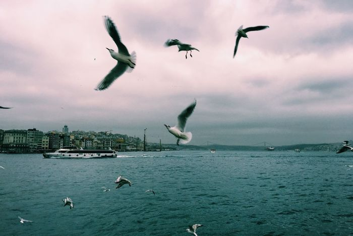 Bosphorus boat excusrtion with beautiful sea view and sea gulls Beautiful Bird Blue Boat Bosphorus Clouds Cold Excursion February Ferry Gulls Istanbul Nature Sea Sea And Sky Sea Gull Ship Sky Storm Tourism Tourist Travel Turkey Water Wave