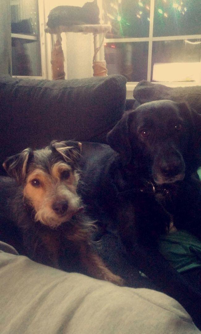 Mydogs Lovemydogs