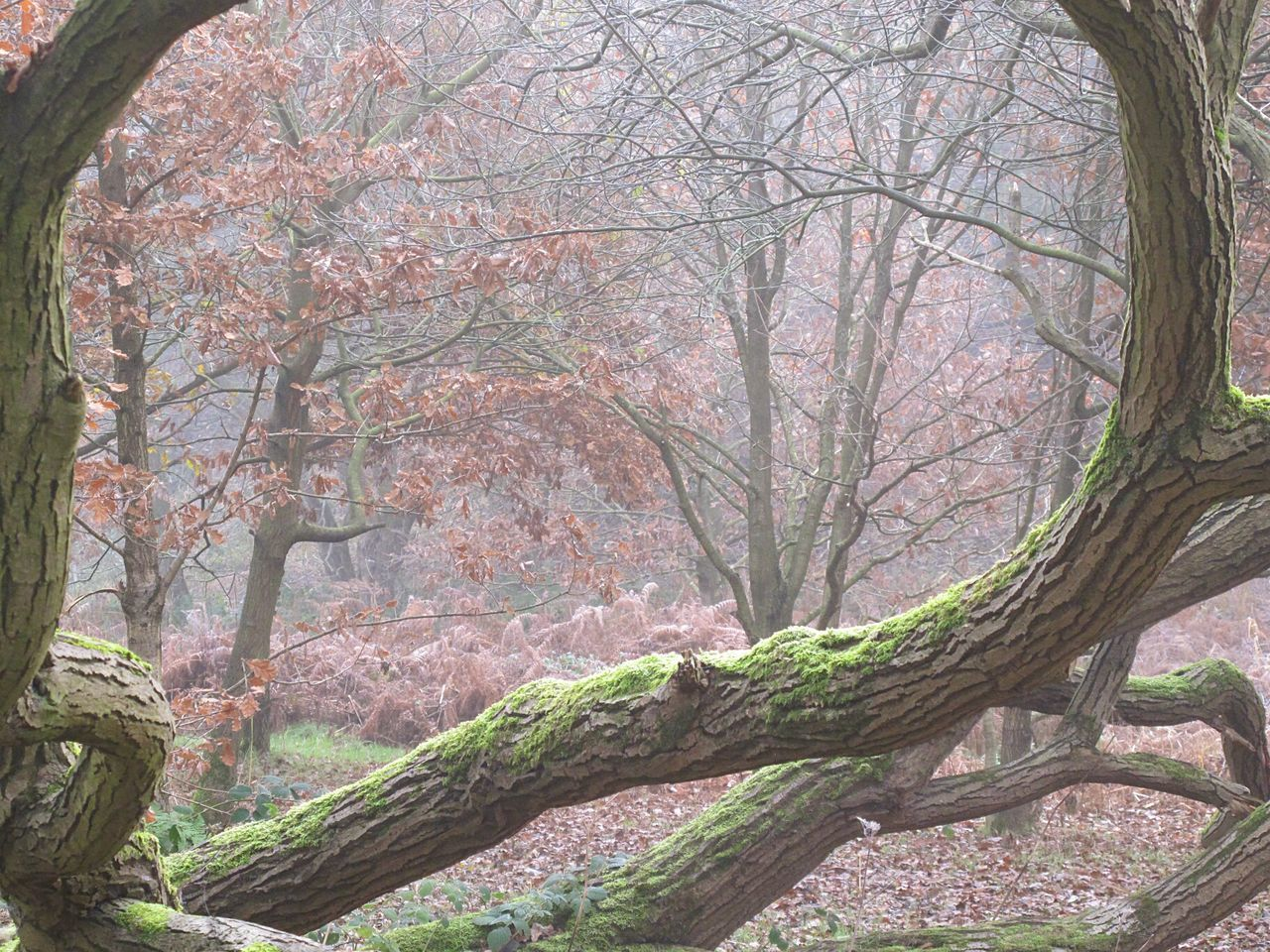 Fog Cold Temperature Autumnbeauty Autumn Leaves Valleys Woodlands EnchantedForest Fineartphotography Foggy Morning EyeEmbestshots Tranquility Outdoors Beauty In Nature Tranquil Scene Tree Frosty Days Non-urban Scene Winter Is Coming WoodLand Foggymornings Change Autumn No People Scenics Branch Tree