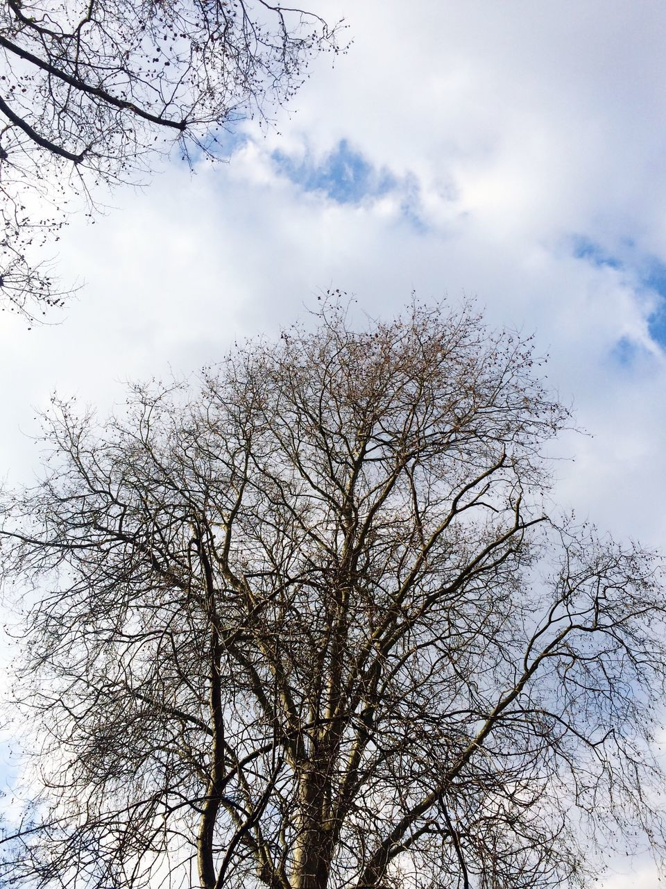 tree, low angle view, sky, branch, nature, bare tree, cloud - sky, no people, beauty in nature, day, outdoors, growth