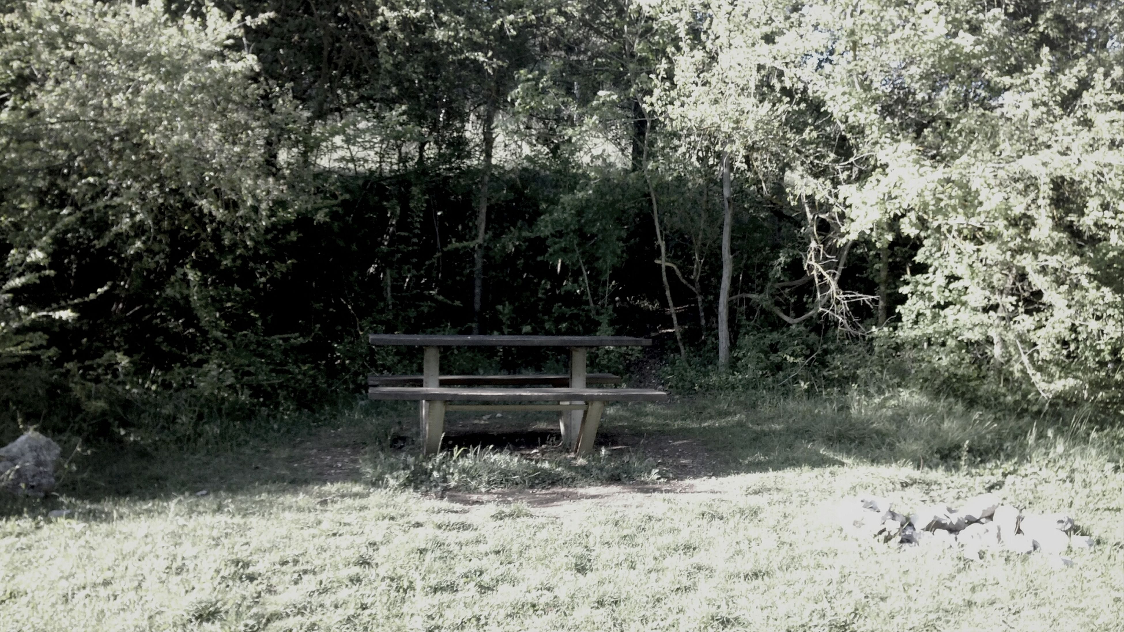 tree, wood - material, tranquility, nature, bench, growth, plant, tranquil scene, wooden, day, built structure, beauty in nature, empty, wood, outdoors, no people, absence, scenics, abandoned, grass