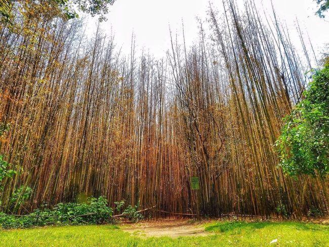 Forest Bamboo Forest Bamboo Huffington Post Stories Outside Photography Outdoor Photography New England  Streamzoofamily Outdoors June 2016 EyeEm Nature Lover Nature_collection Beautiful Nature Rhode Island Landscape Nature Photography [