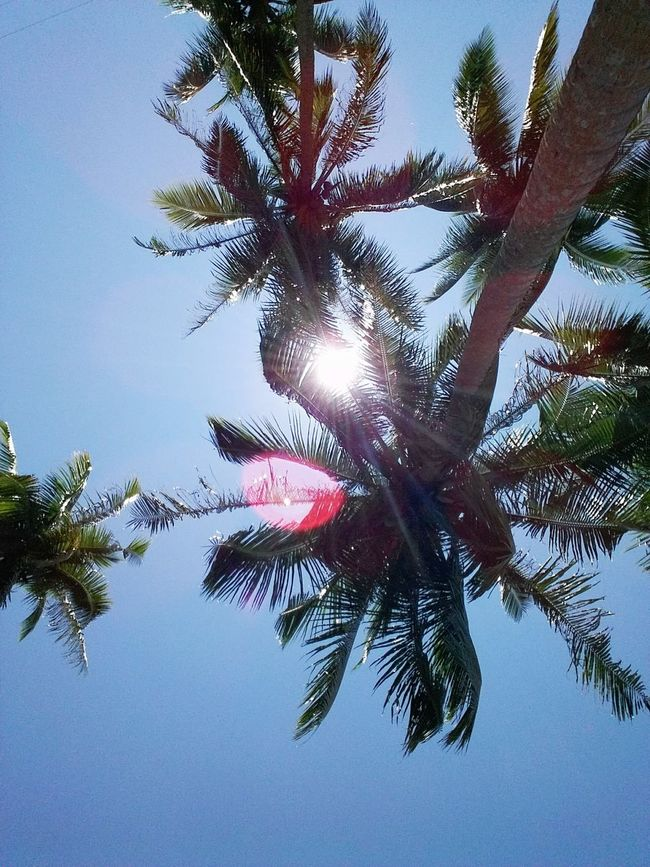 Summer is here! Summervacation Sunshine Trees And Sky Trees Sunrays Sunrays Through The Branches The Essence Of Summer