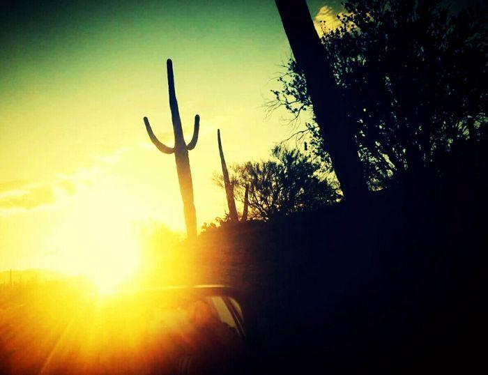 Saguaro National Forest visting mum! Sunrise Desert Beauty AriZona♡ DesertSky