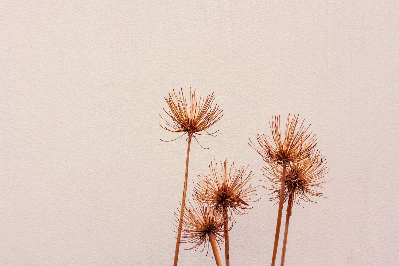 Autumn Autumn Colors Beauty In Nature Dry Dry Flower  Minimalism Nature Plant Stem Wall
