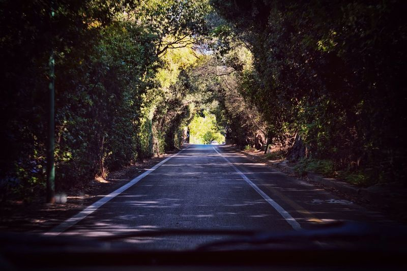 Road The Way Forward Tree Nature Empty Road Traveling Travel Tree Trunk Tranquil Scene NikonD5500 First Eyeem Photo