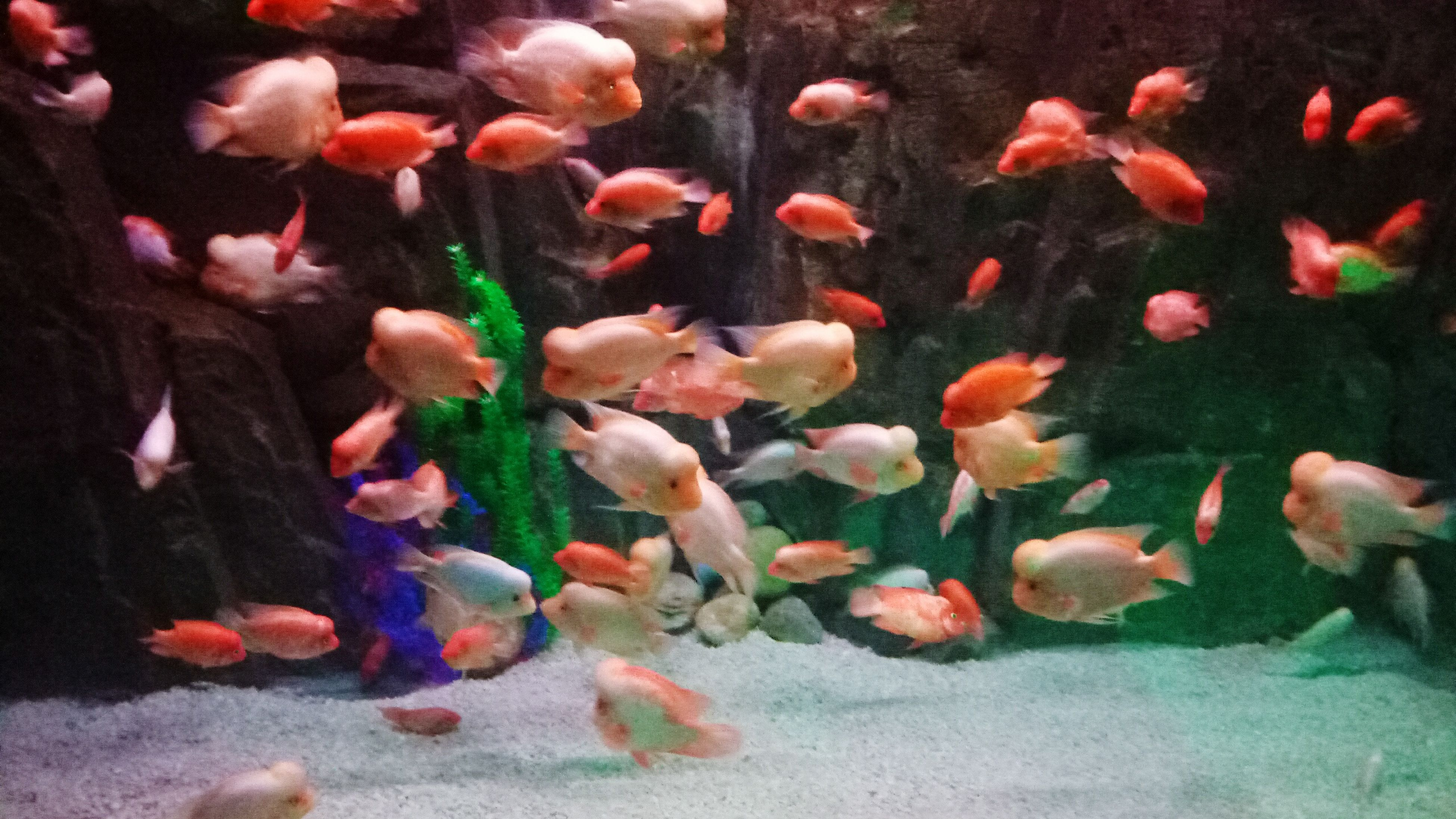 large group of animals, animal themes, swimming, fish, underwater, animals in the wild, nature, motion, no people, water, sea life, indoors, beauty in nature, undersea, day