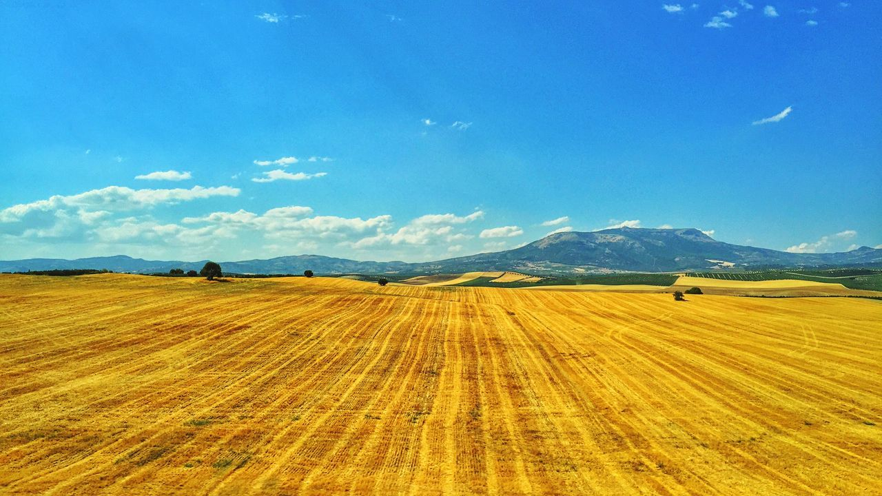 Beautiful stock photos of spain, Agriculture, Beauty In Nature, Blue, Cereal Plant