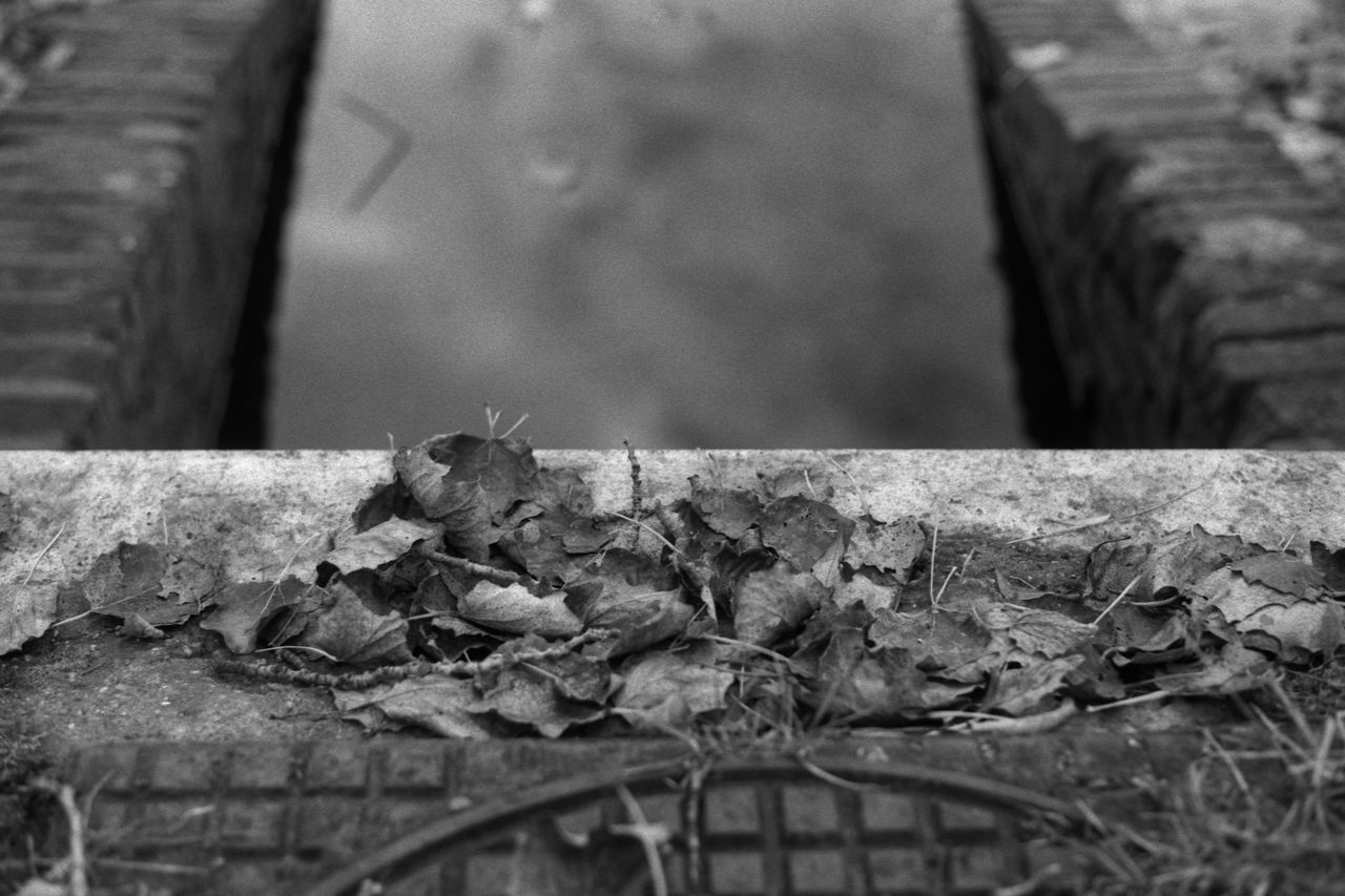 Autumn 35mm Film Analogue Photography Autumn Black & White Bricks Brickwork  Fomapan100 Lake Leaves Masonry Nature Park Pond Rodinal Season  Shallow Depth Of Field Stones Symmetrical Symmetry Urban Water Well