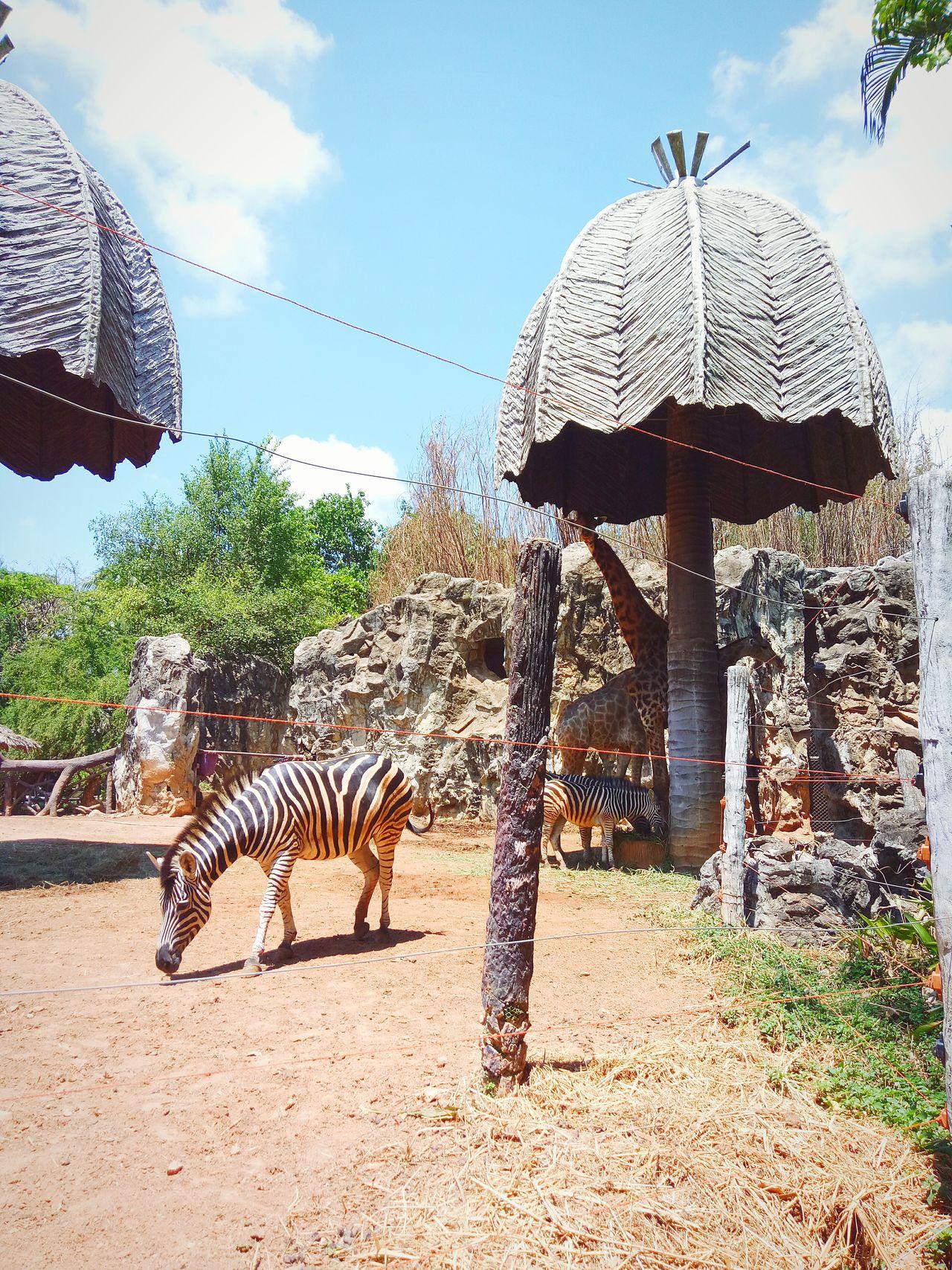 Zebra Animal Themes Animals In The Wild Large Group Of Animals Giraffe No People Sky Safari Animals Outdoors Animal Wildlife Elephant Mammal Tree Nature Day Grass Water African Elephant Leopard